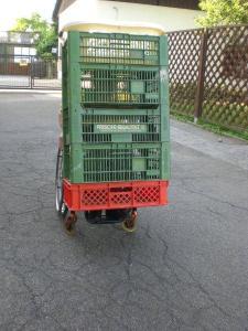 Obstkisten im Rollstuhl mobil