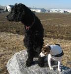 Ronja und Dada - auf der Suche